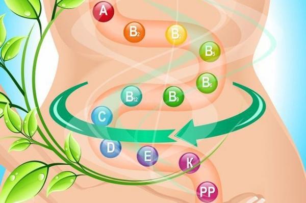 Шесть продуктов, способных увеличить рост хороших кишечных бактерий.