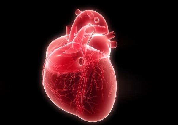 Очень интересные факты о сердце